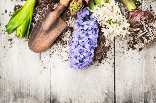 Tips for spring gardening