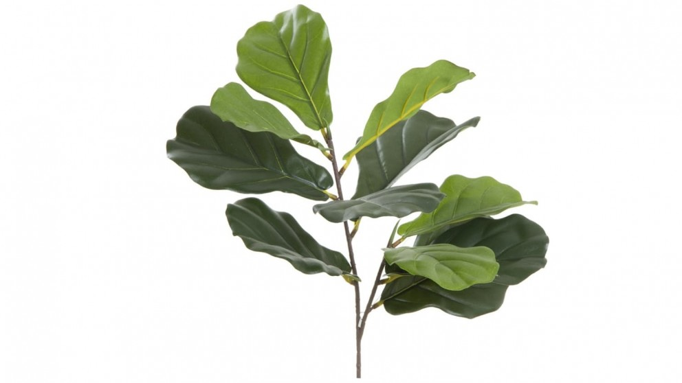Fiddle leaf from Harvey Norman