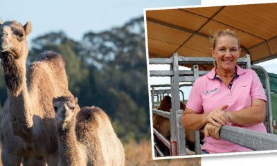 Camel farming was never part of her grand plan, but QCamel founder Lauren Brisbane and her family have become pioneers in this niche industry in Australia, and they've found their happy place right here on the Sunshine Coast.